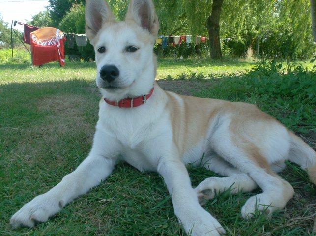 Airedale Terrier : caractre, ducation, sant, entretien