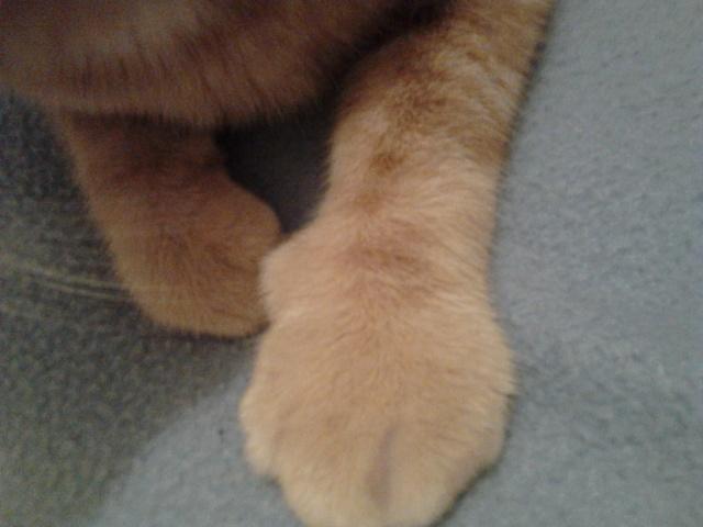 Extrêmement Mon chat a la patte gonflée - Forum Soigner son chat - Gouttière  RX96