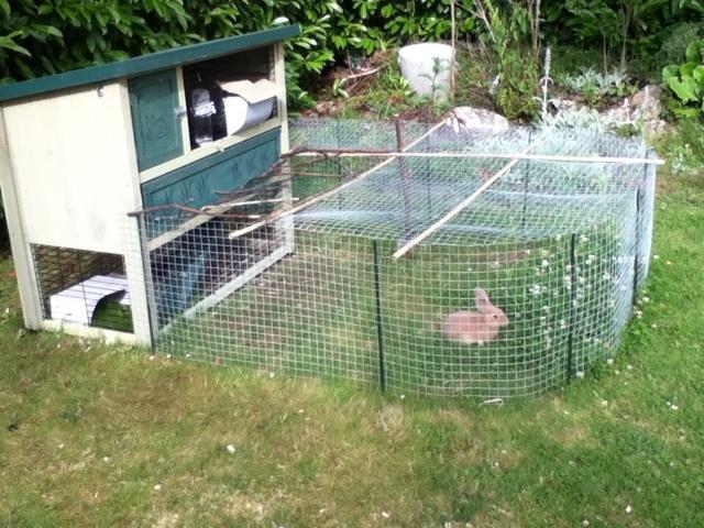 Cage clapier ou enclos question cochon d 39 inde wamiz - Enclos lapin pas cher ...