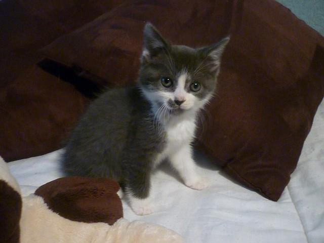 Accueillir un nouveau chat a la maison? Yahoo Questions