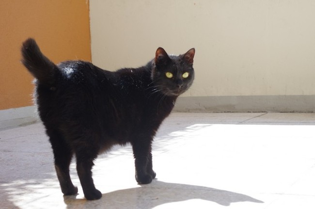 Pourquoi ce chat a la queue coup e forum chats tha - A quel age couper les griffes d un chat ...