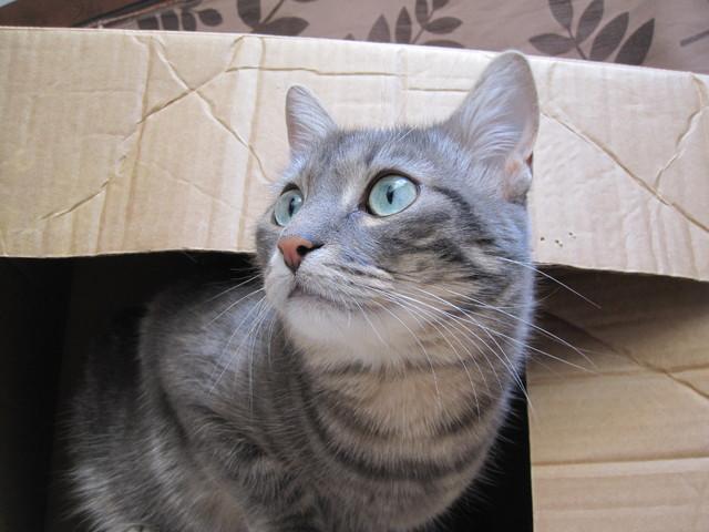 Mon chat se ronge les griffes forum comprendre son chat - A quel age couper les griffes d un chat ...