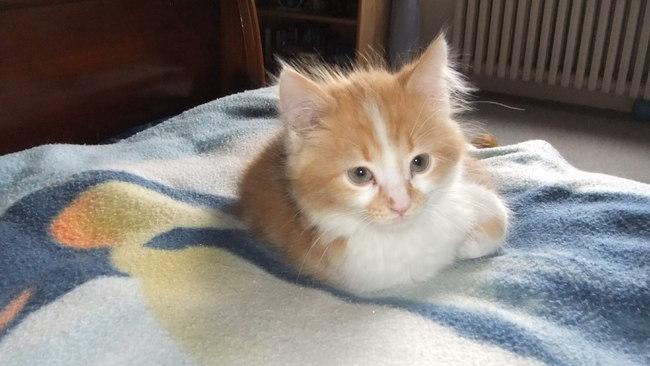 connaissez vous un produit pour laver le nez de mon chat forum soigner son chat europ en. Black Bedroom Furniture Sets. Home Design Ideas