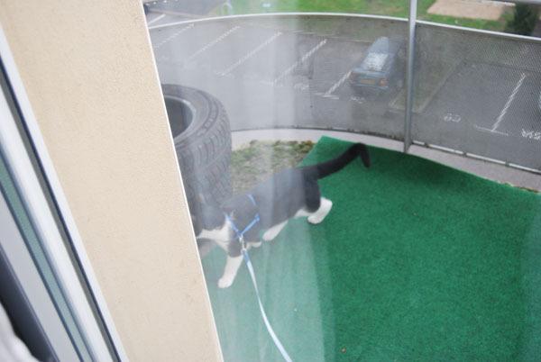 s curiser son balcon pour le chat forum chats page 3 wamiz. Black Bedroom Furniture Sets. Home Design Ideas
