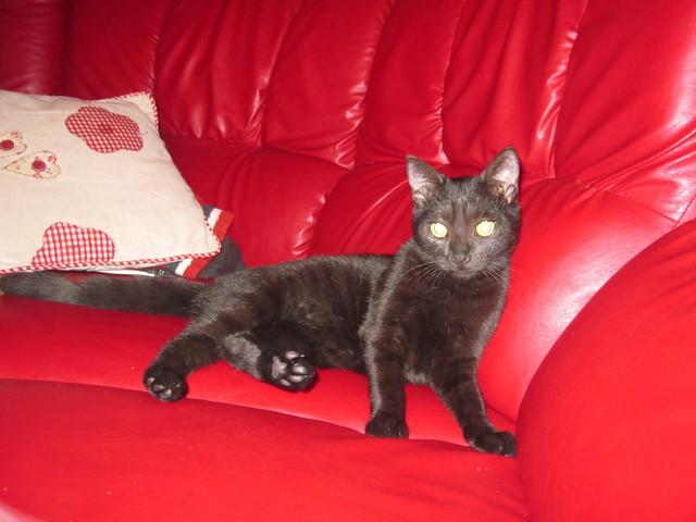 famille d 39 accueil on a adopt la chatte forum chats europ en page 2 wamiz. Black Bedroom Furniture Sets. Home Design Ideas