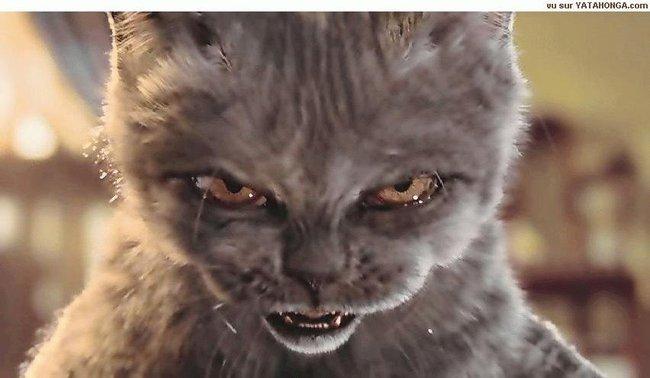 Mon chat ne veut pas prendre ses comprim s avez vous des astuces svp question soigner son - Chat qui perd pas ses poils ...
