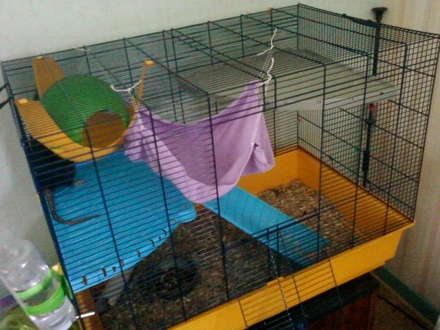 un hamac pour rongeurs forum rat rat wamiz. Black Bedroom Furniture Sets. Home Design Ideas