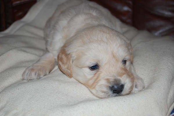 Chiot a donner ! - Forum chiens à donner - Wamiz