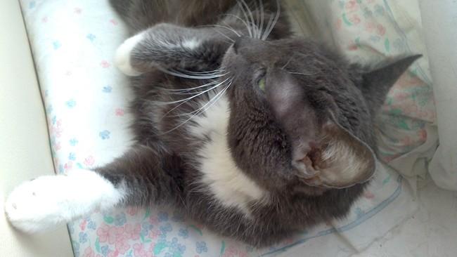Pourquoi mon chat me lche-t-il le visage ? Yahoo