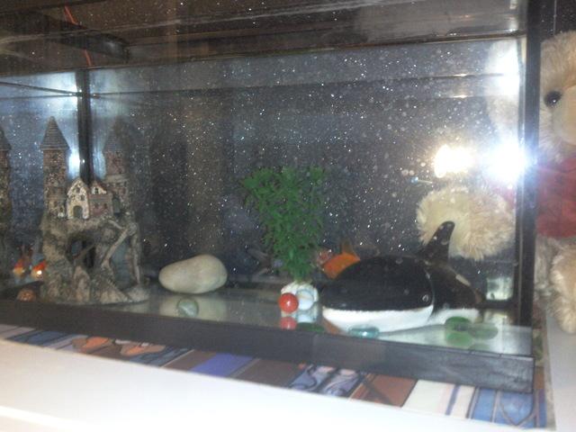Pour tous les propri taires de poissons rouges forum for Poisson rouge aquarium 20l