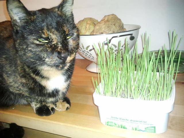 l 39 herbe chat que mon chat n 39 aime pas forum comprendre son chat europ en wamiz. Black Bedroom Furniture Sets. Home Design Ideas