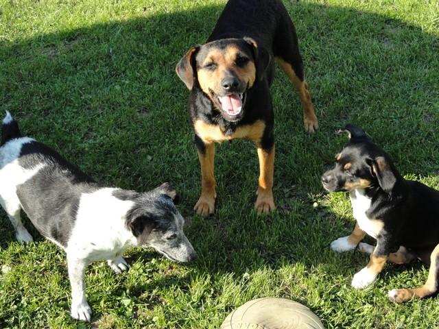 Jeux de chiens =P - Forum Voyager et jouer avec son chien