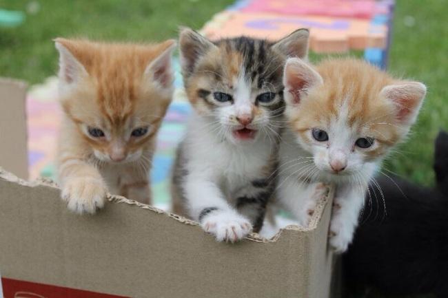 L 39 arriv e d 39 un chaton a la maison forum chats for Arrivee chaton a la maison