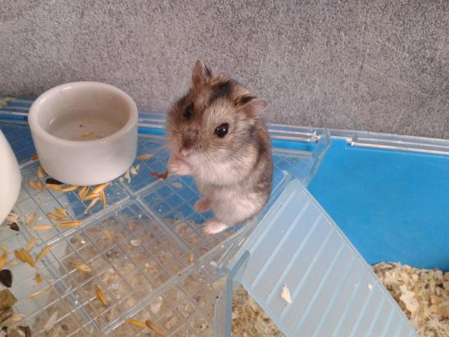 Questions hamster forum hamster hamster wamiz - Couper les griffes d un chaton de 2 mois ...