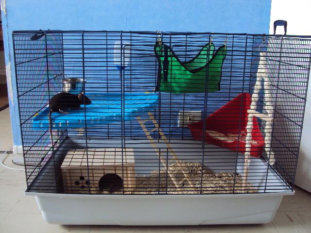 comment faire pour faire une cage parfaite pour mon rat. Black Bedroom Furniture Sets. Home Design Ideas