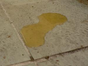 mousse dans les urines