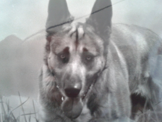 mon chien mort me manque que faire question comprendre son chien wamiz. Black Bedroom Furniture Sets. Home Design Ideas