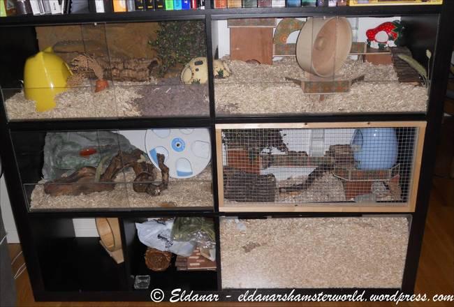 Quoi ressemble votre cage hamster forum hamster for A quoi ressemble ta maison