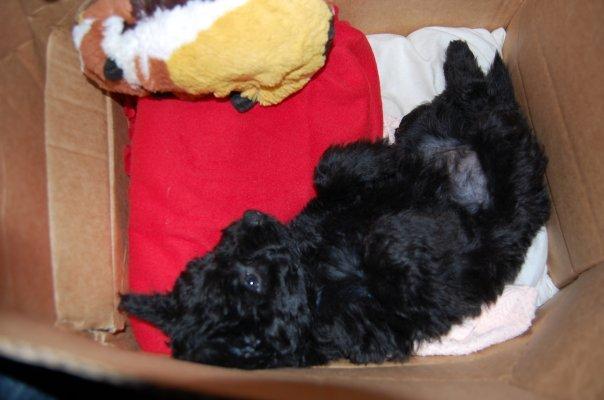 comment faire pour que mon chiot reste dans son panier la nuit forum eduquer son chien. Black Bedroom Furniture Sets. Home Design Ideas