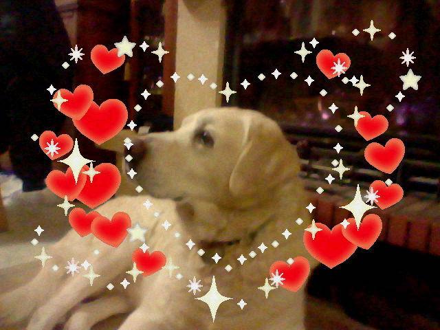 un autre tragique mort de mes chien forum chiens labrador retriever wamiz. Black Bedroom Furniture Sets. Home Design Ideas