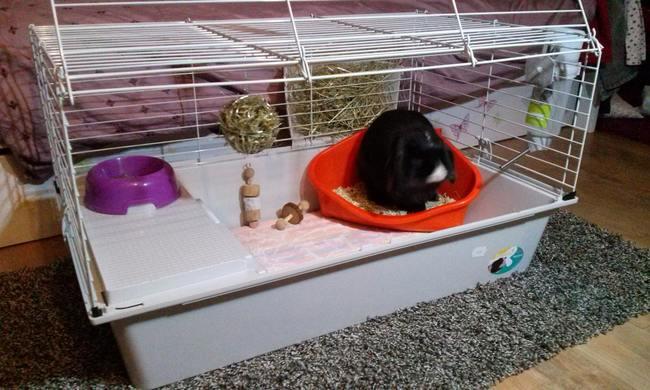 cage avec quipement complet urgent forum accessoires animaux wamiz. Black Bedroom Furniture Sets. Home Design Ideas