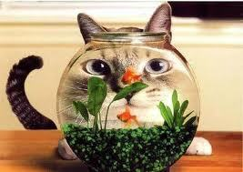 Nom pour mon nouveau poisson forum aquariophilie wamiz - Poisson rouge rigolo ...