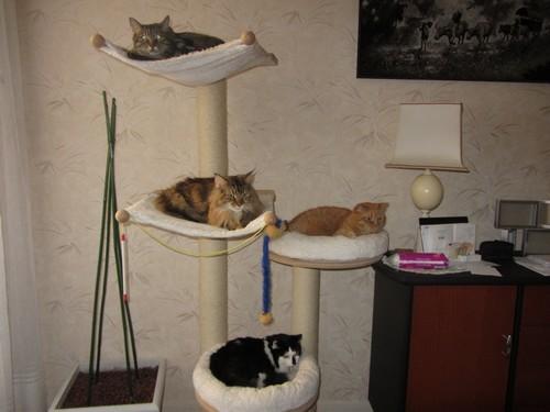 apprentissage de l 39 arbre chat forum eduquer son chat. Black Bedroom Furniture Sets. Home Design Ideas