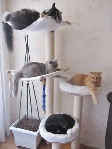 quel arbre chat choisir quel brosse forum entretenir son chat birman wamiz. Black Bedroom Furniture Sets. Home Design Ideas