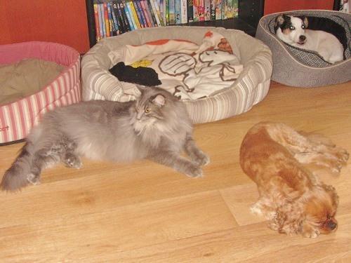 entre mon chat et mon chien ce n 39 est pas le grand amour forum eduquer son chien dalmatien. Black Bedroom Furniture Sets. Home Design Ideas