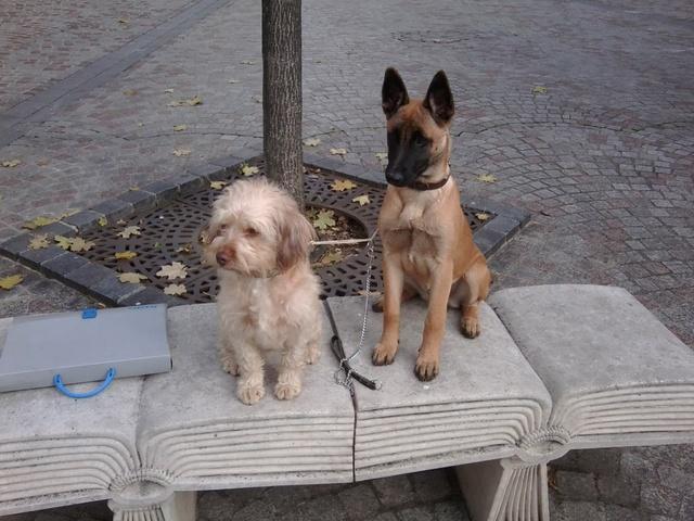 Croquette naturelle composition forum nourrir son chien berger belge wamiz - Comparatif croquettes chien 60 millions ...