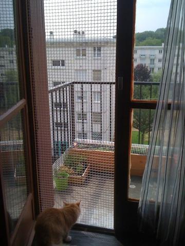 les fen tres forum chats wamiz. Black Bedroom Furniture Sets. Home Design Ideas
