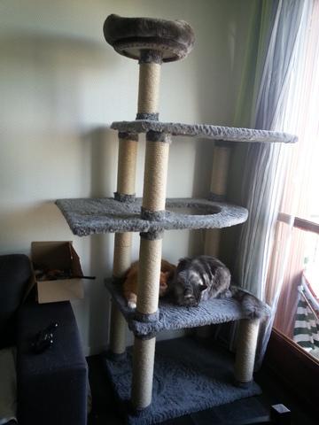 Faire soi m me son arbre chat forum pratique maine coon page 3 wamiz - Fabriquer soi meme son arbre a chat ...