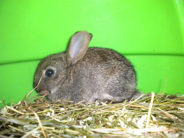 J 39 ai trouv des b b s lapins de garenne dans mon jardin - Comment se debarrasser des lapins sauvages ...