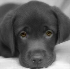 comment savoir si son chien est heureux forum. Black Bedroom Furniture Sets. Home Design Ideas
