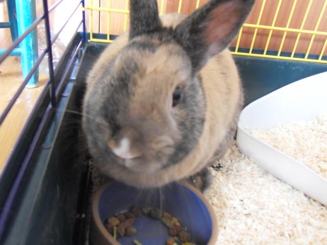 Rencontre entre 2 lapins nains Tres bon site de rencontre gratuit
