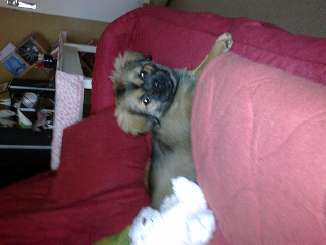 a quel ge un chien commence t il aboyer question eduquer son chien wamiz. Black Bedroom Furniture Sets. Home Design Ideas