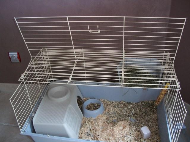 Je vends une cage pour cochon d 39 inde forum cochon d 39 inde cochon d 39 inde wamiz - Fabriquer cage cochon d inde ...
