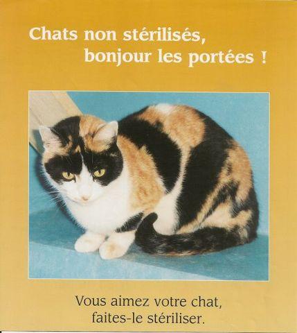 comment savoir quand une chatte va accoucher forum reproduction du chat page 2 wamiz. Black Bedroom Furniture Sets. Home Design Ideas
