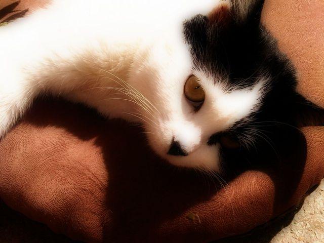 Stériliser un chat gratuitement