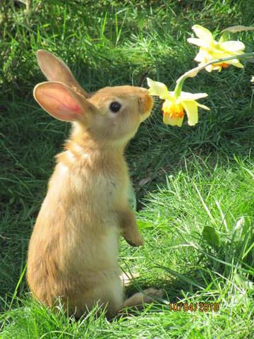 Lapin de garenne donner forum rongeurs wamiz - Cuisiner un lapin de garenne ...