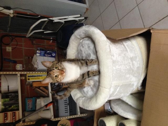 quel arbre chat choisir forum chats goutti re. Black Bedroom Furniture Sets. Home Design Ideas