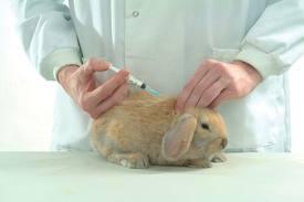 A quel âge puis-je faire vacciner ma lapine ? - question Lapin - Wamiz