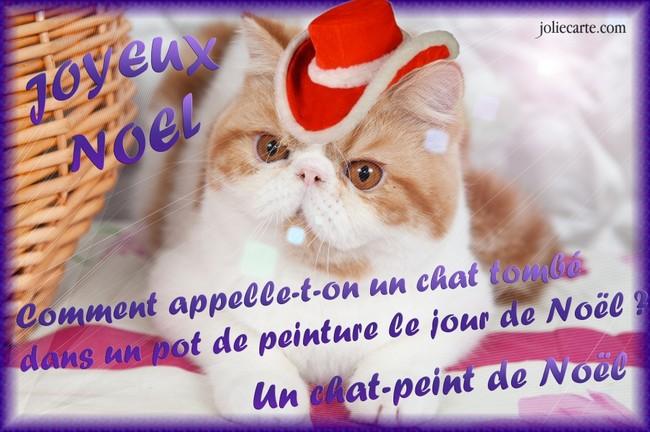 A vos appareils photos forum concours photos wamiz - Image de chat de noel ...