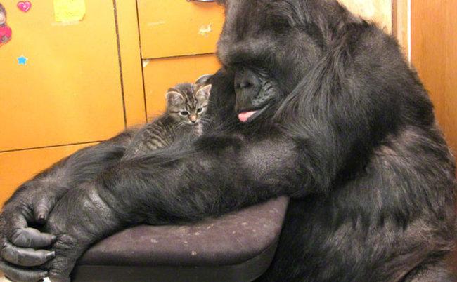 Jean S Cat Has  Kittens