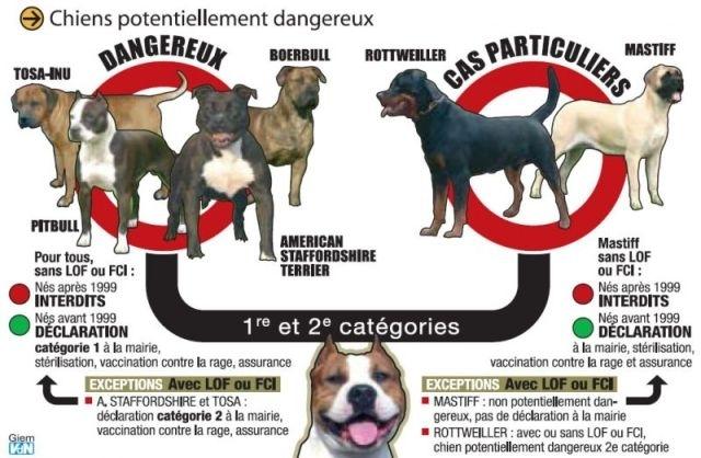 Que chosir entre un Pitbull et un Rottweiler ? - question