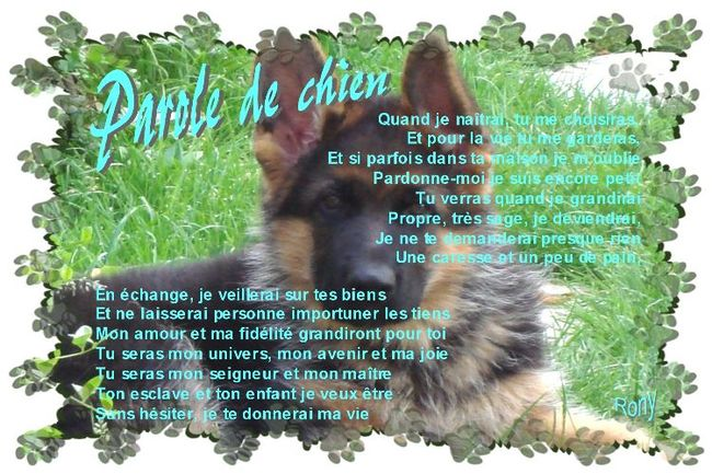 Paroles de la méchante chienne