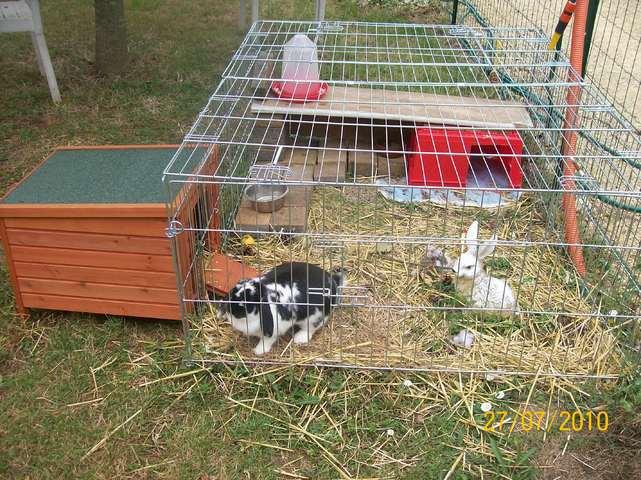 Id e pour enclos lapin forum rongeurs wamiz for Construire une cage a lapin exterieur