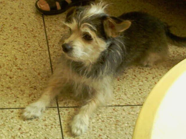 Mon chien me grogne ! - Forum Comprendre son chien - Wamiz