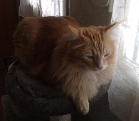 Comment enlever les noeuds a ras de la peau sur le chat - Comment couper les griffes de son chat ...