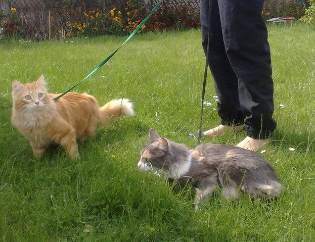 Solution pour mes chats qui ont besoin de s 39 a rer forum chats wamiz - Mes chats ont des puces ...